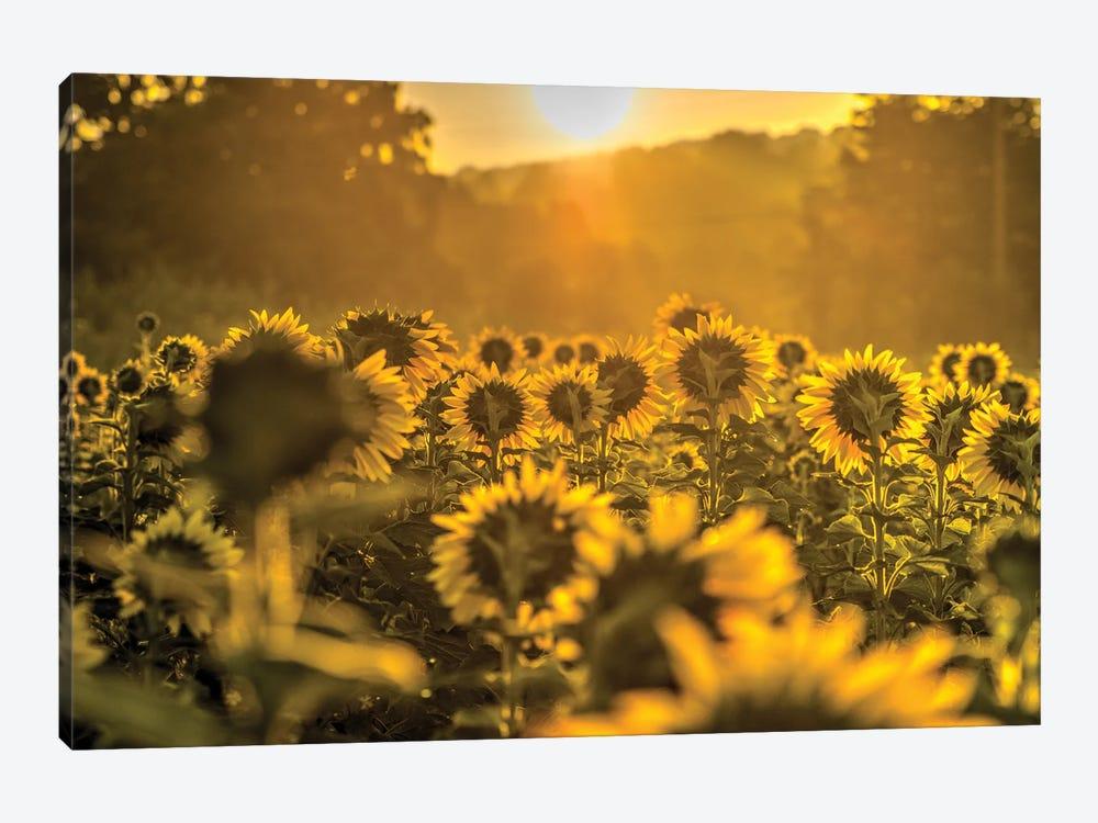 Into the Sun by David Gardiner 1-piece Canvas Art Print