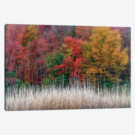 Jersey Colors Canvas Print #DVG241} by David Gardiner Canvas Art