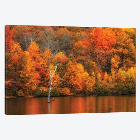 Jersey Fall Canvas Print #DVG242} by David Gardiner Canvas Wall Art