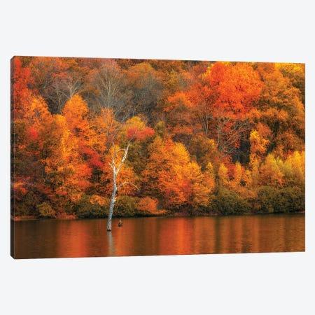 Jersey Fall Canvas Print #DVG242} by David Gardiner Canvas Wall Art