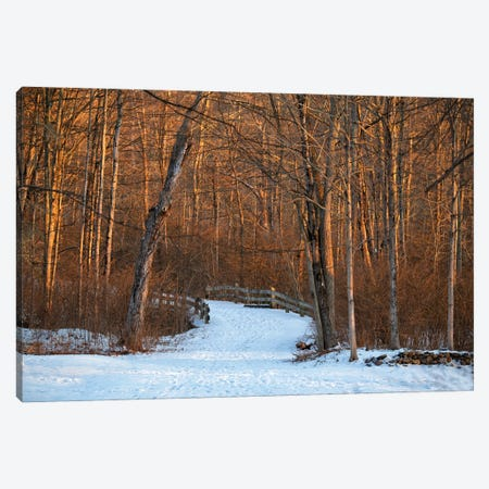 Long Pond Path Canvas Print #DVG245} by David Gardiner Canvas Print