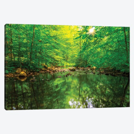 Morning Pond Canvas Print #DVG256} by David Gardiner Canvas Wall Art