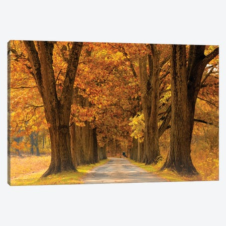 Oak Alley Fall Canvas Print #DVG258} by David Gardiner Canvas Print