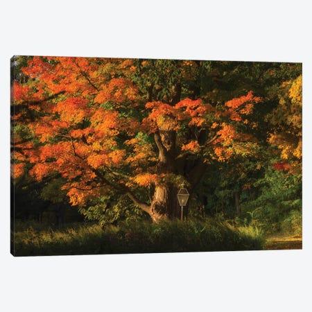 Old Oak Canvas Print #DVG259} by David Gardiner Art Print