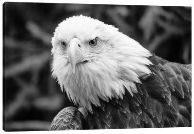 Eager Eagle Canvas Art Print