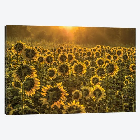 Sun Worshipers Canvas Print #DVG277} by David Gardiner Canvas Artwork
