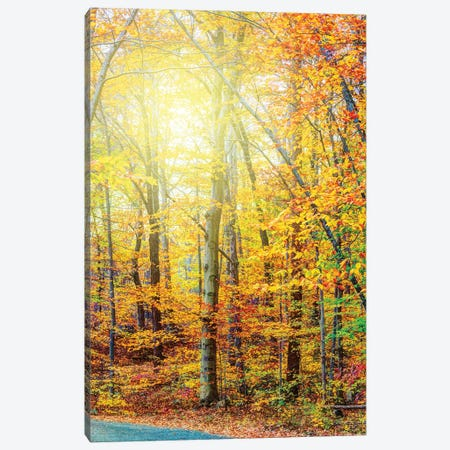 Sunlit Fall Canvas Print #DVG278} by David Gardiner Art Print