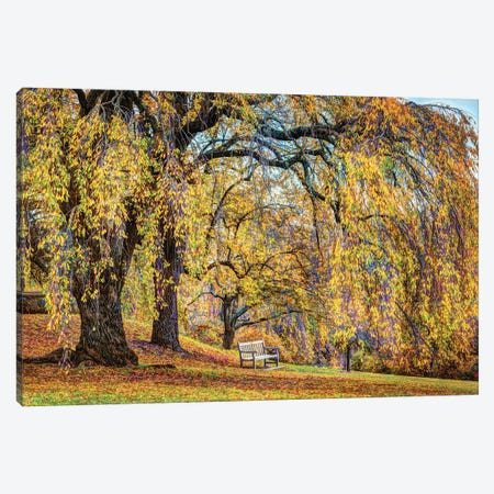 Willow Bench Canvas Print #DVG287} by David Gardiner Canvas Art Print