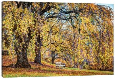 Willow Bench Canvas Art Print