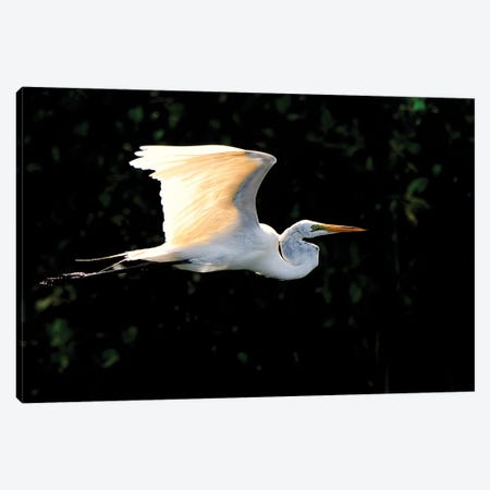 Egret Flight Canvas Print #DVG31} by David Gardiner Canvas Wall Art