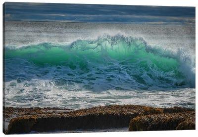 Backlit Green Canvas Art Print