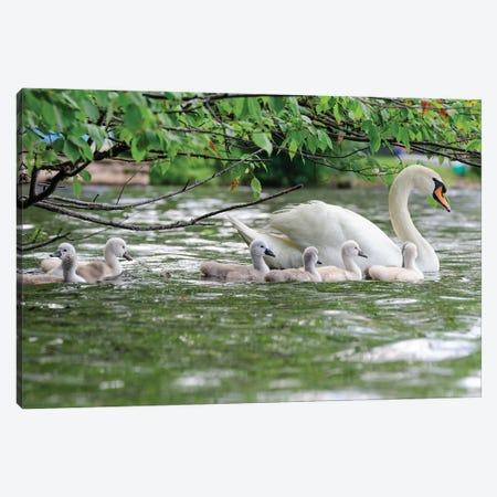 Family Float Canvas Print #DVG34} by David Gardiner Art Print