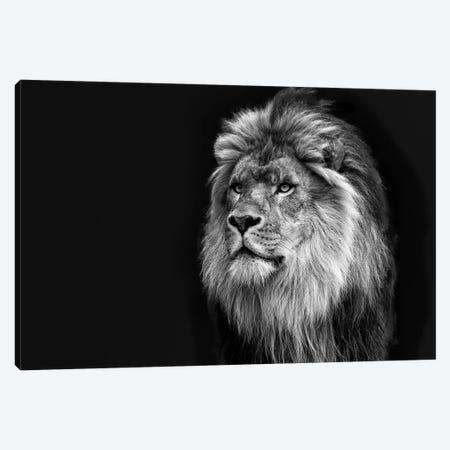 Majestic in Black & White Canvas Print #DVG52} by David Gardiner Canvas Art