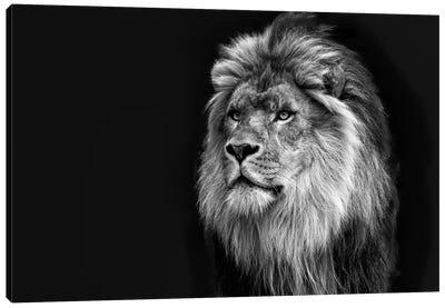 Majestic in Black & White Canvas Art Print