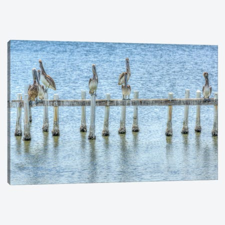 Pelican Pier Canvas Print #DVG59} by David Gardiner Canvas Art