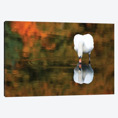 Reflected Swan II Canvas Print #DVG64} by David Gardiner Canvas Art