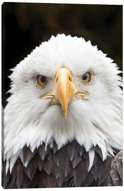 Regal Eagle Canvas Art Print