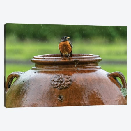 Robin on a Pot 3-Piece Canvas #DVG67} by David Gardiner Canvas Art
