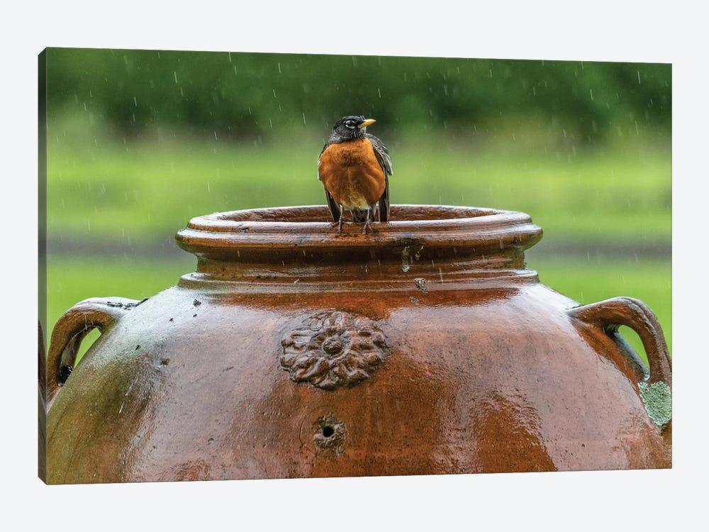 Robin on a Pot by David Gardiner 1-piece Art Print