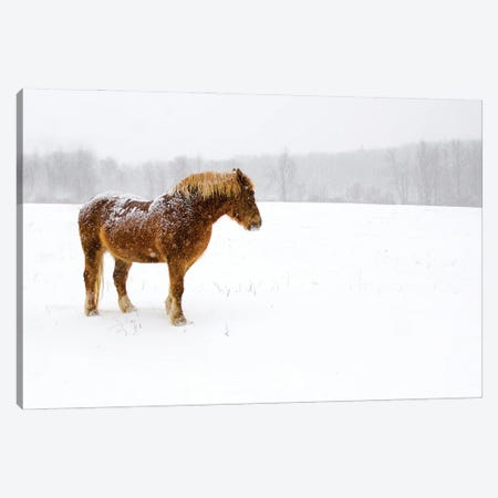 Snowbound Canvas Print #DVG70} by David Gardiner Canvas Wall Art