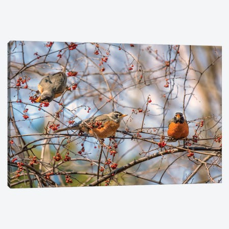 Spring Robins II 3-Piece Canvas #DVG73} by David Gardiner Canvas Wall Art