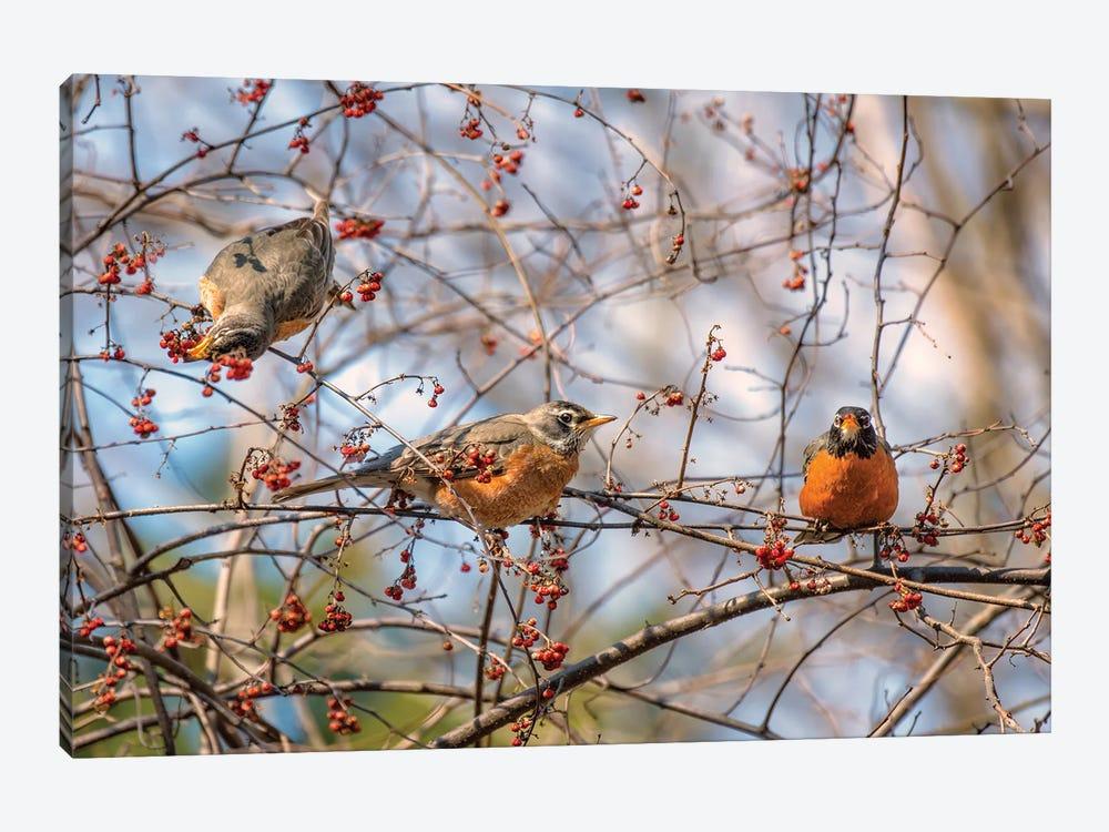 Spring Robins II by David Gardiner 1-piece Canvas Art