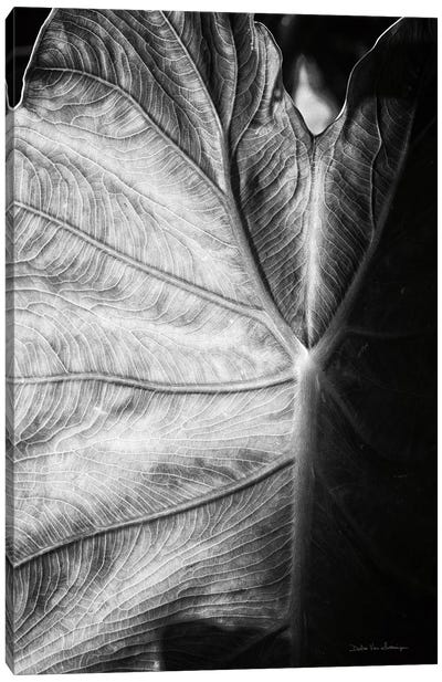 Elephant Ear I Canvas Art Print