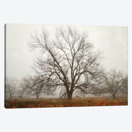 Morning Calm I Canvas Print #DVS14} by Debra Van Swearingen Canvas Art Print