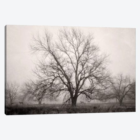 Morning Calm I BW 3-Piece Canvas #DVS15} by Debra Van Swearingen Canvas Art Print