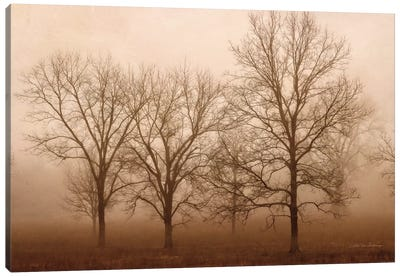 Morning Calm III Canvas Art Print