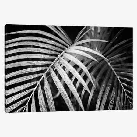 Palm Fronds Canvas Print #DVS2} by Debra Van Swearingen Canvas Wall Art