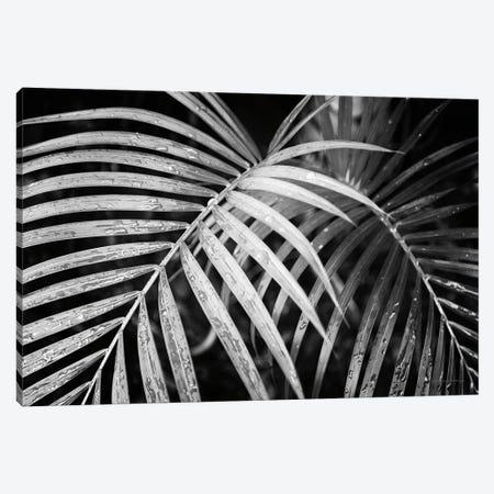 Palm Fronds Canvas Print #DVS2} by Debra Van Swearingen Canvas Wall Art