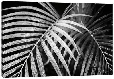 Palm Fronds Canvas Art Print