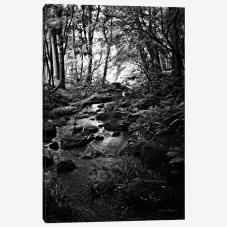 Lush Creek in Forest BW Canvas Print #DVS6} by Debra Van Swearingen Canvas Art Print