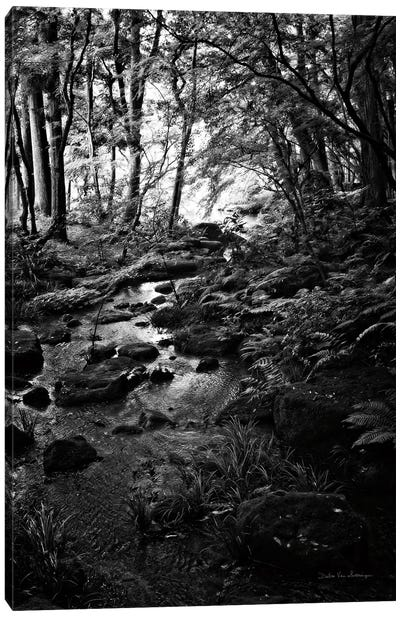 Lush Creek in Forest BW Canvas Art Print