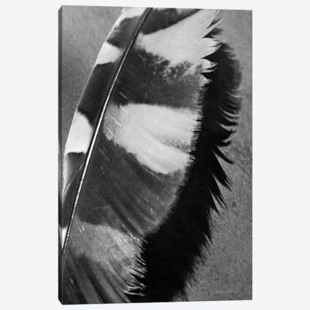 Feather Shadow I Canvas Print #DVS7} by Debra Van Swearingen Art Print