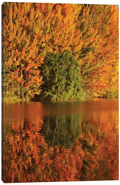 Autumn reflections in Kellands Pond, South Canterbury, South Island, New Zealand I Canvas Art Print