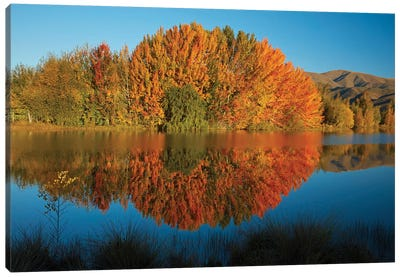 Autumn reflections in Kellands Pond, South Canterbury, South Island, New Zealand II Canvas Art Print