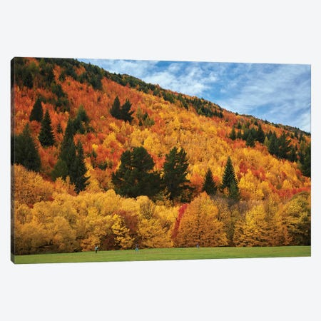 Autumn trees and Wilcox Green, Arrowtown, near Queenstown, Otago, South Island, New Zealand Canvas Print #DWA16} by David Wall Canvas Wall Art