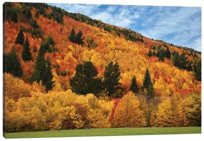 Autumn trees and Wilcox Green, Arrowtown, near Queenstown, Otago, South Island, New Zealand Canvas Art Print
