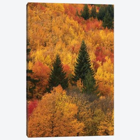 Autumn trees, Arrowtown, near Queenstown, Otago, South Island, New Zealand Canvas Print #DWA18} by David Wall Canvas Art Print