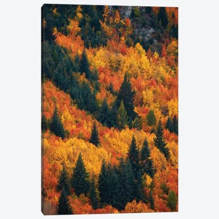 Autumn trees, Arrowtown, near Queenstown, Otago, South Island, New Zealand Canvas Print #DWA19} by David Wall Canvas Art Print