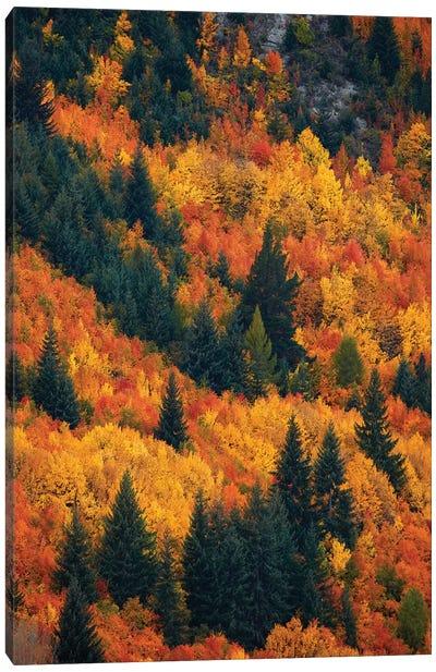 Autumn trees, Arrowtown, near Queenstown, Otago, South Island, New Zealand Canvas Art Print