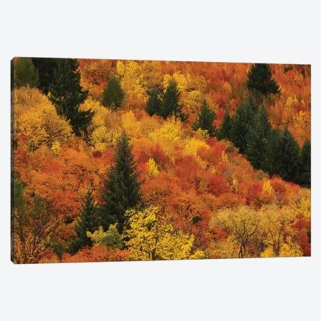 Autumn trees, Arrowtown, near Queenstown, Otago, South Island, New Zealand Canvas Print #DWA20} by David Wall Canvas Art