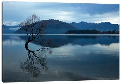 Clouds and 'That Wanaka Tree' reflected in Lake Wanaka, Otago, South Island, New Zealand Canvas Art Print