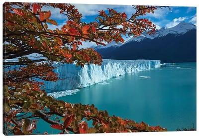 Perito Moreno Glacier and lenga trees in autumn, Parque Nacional Los Glaciares, Patagonia Canvas Art Print