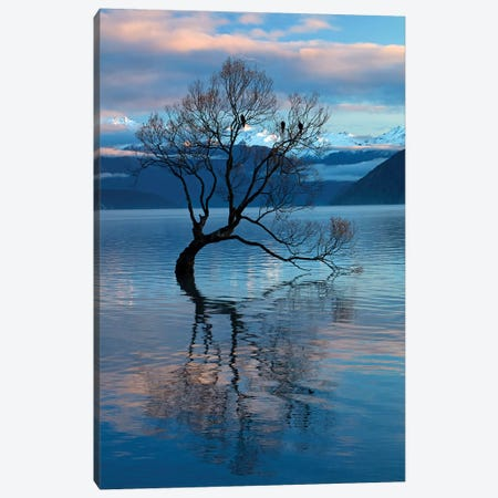 That Wanaka Tree reflected in Lake Wanaka, Otago, South Island, New Zealand Canvas Print #DWA33} by David Wall Canvas Print