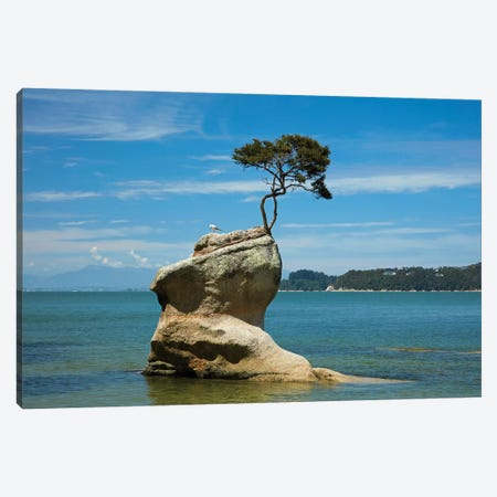 Tree on rock, Tinline Bay, Abel Tasman National Park, Nelson Region, South Island, New Zealand Canvas Print #DWA34} by David Wall Canvas Artwork