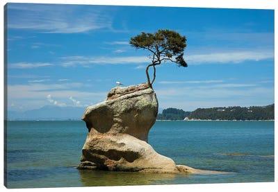 Tree on rock, Tinline Bay, Abel Tasman National Park, Nelson Region, South Island, New Zealand Canvas Art Print