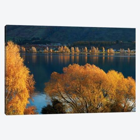 Willow and poplar trees in autumn, Lake Wanaka, Otago, South Island, New Zealand Canvas Print #DWA36} by David Wall Canvas Art